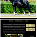 Stallions - Amigo stallion card
