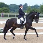 Stallions - Cadans 1